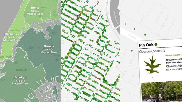 Katalog drzew Nowego Jorku