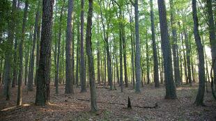 Połowa lasów zagrożona pożarem. Sytuację poprawiają ostatnie opady deszczu