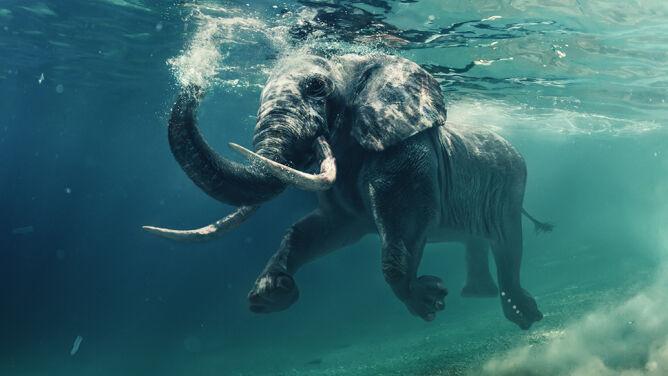 Pierwsze masowe wymieranie dzikich zwierząt od 65 mln lat?