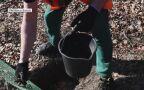 Akcja ratowania migrujących żab